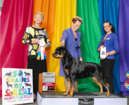 Rottweiler Vanna at 2016 National