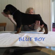 blue_boy_071016