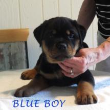 blue_boy_071016_2