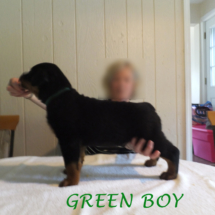 green_boy_071016