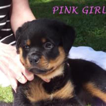 pink_girl_071016_2