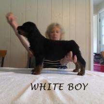 white_boy_071016