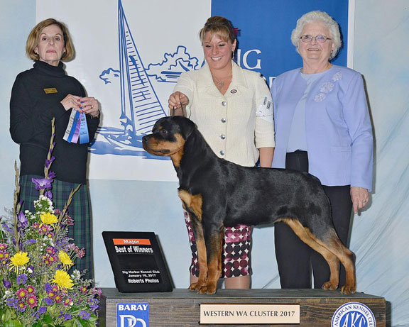 Hattie winning a 4-point major at 8 months of age at the Puyallup/Portland shows