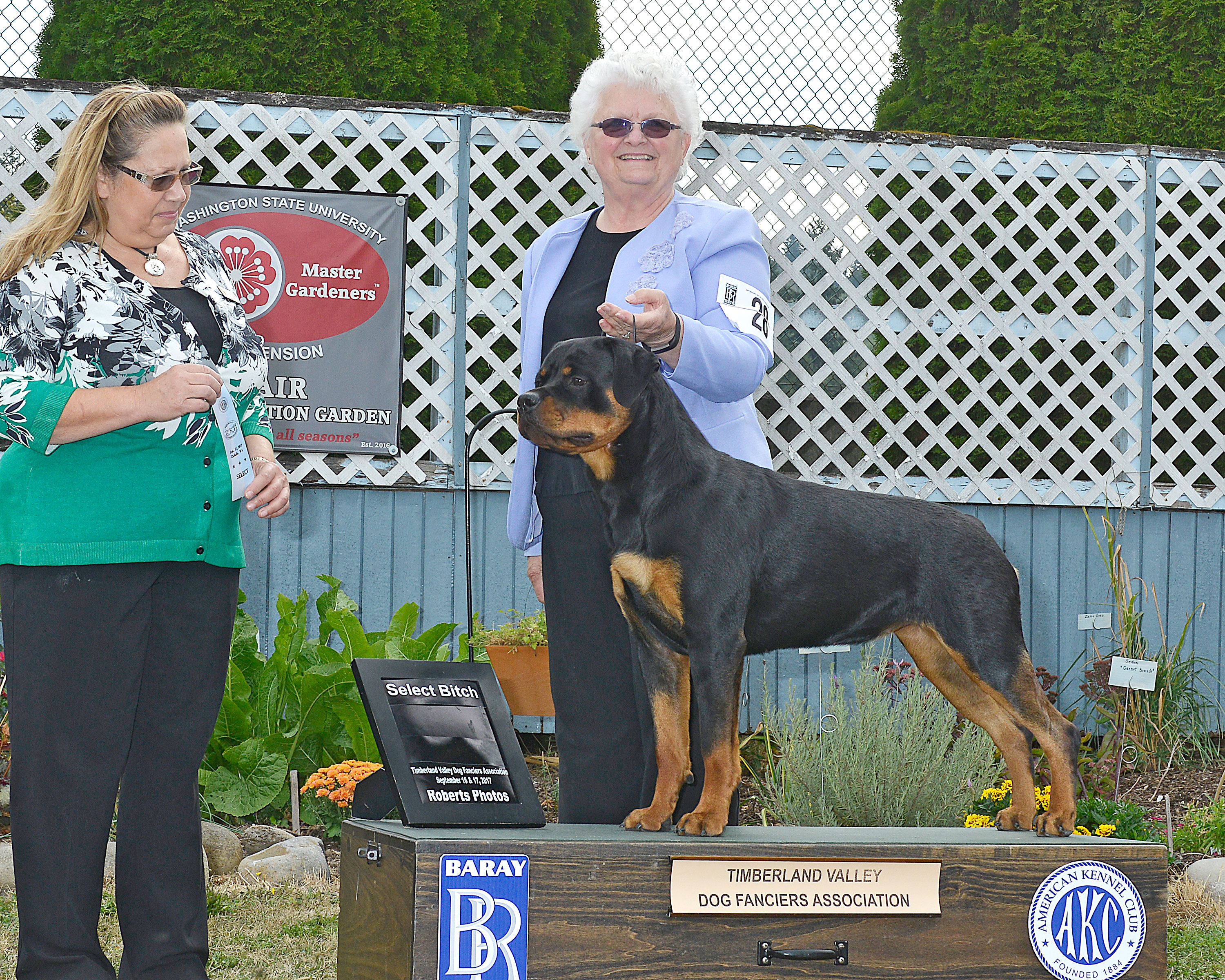 Hattie earning another select towards her Grand Championship - 15 months