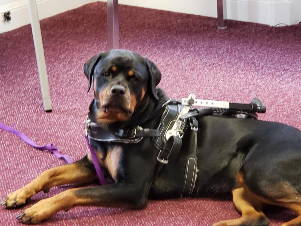Kasey - Service Dog for her owner